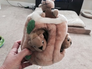 Hide-a-Squirrel! My favorite!