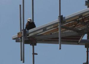 Guarding the nest (photo from MiamiHerald.com)