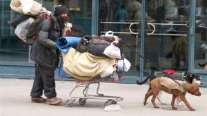 homeless_pets
