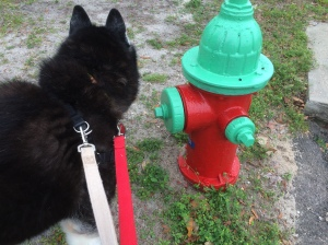 Ooh! I wonder who's visited the hydrant since I was last here?
