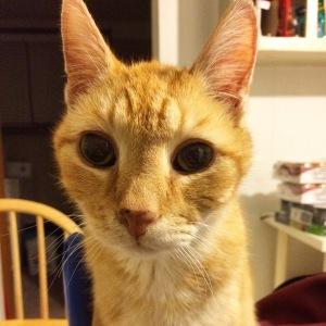 June Buggie has wide eyes that make him look so darn cute!