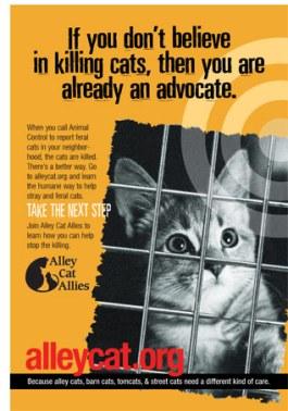 kill-cats