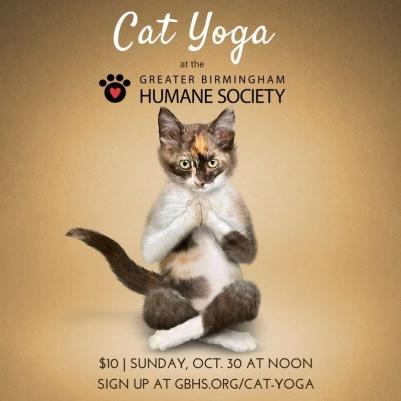 cat-yoga-bham