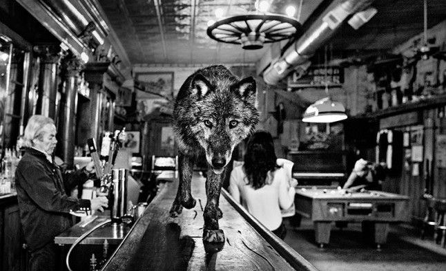wolf_in_bar_web-800x486