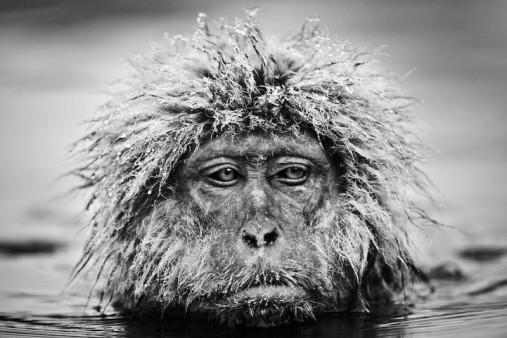 grumpy-monkey