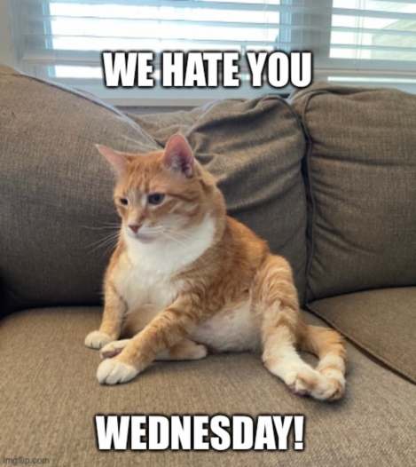 We Hate You Wednesday – Black CatEdition
